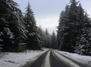 Whinlatter Snow